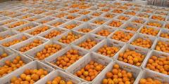 北港股份冷链业务新增出口水果品种